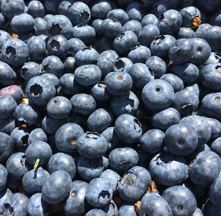 Blueberries loose